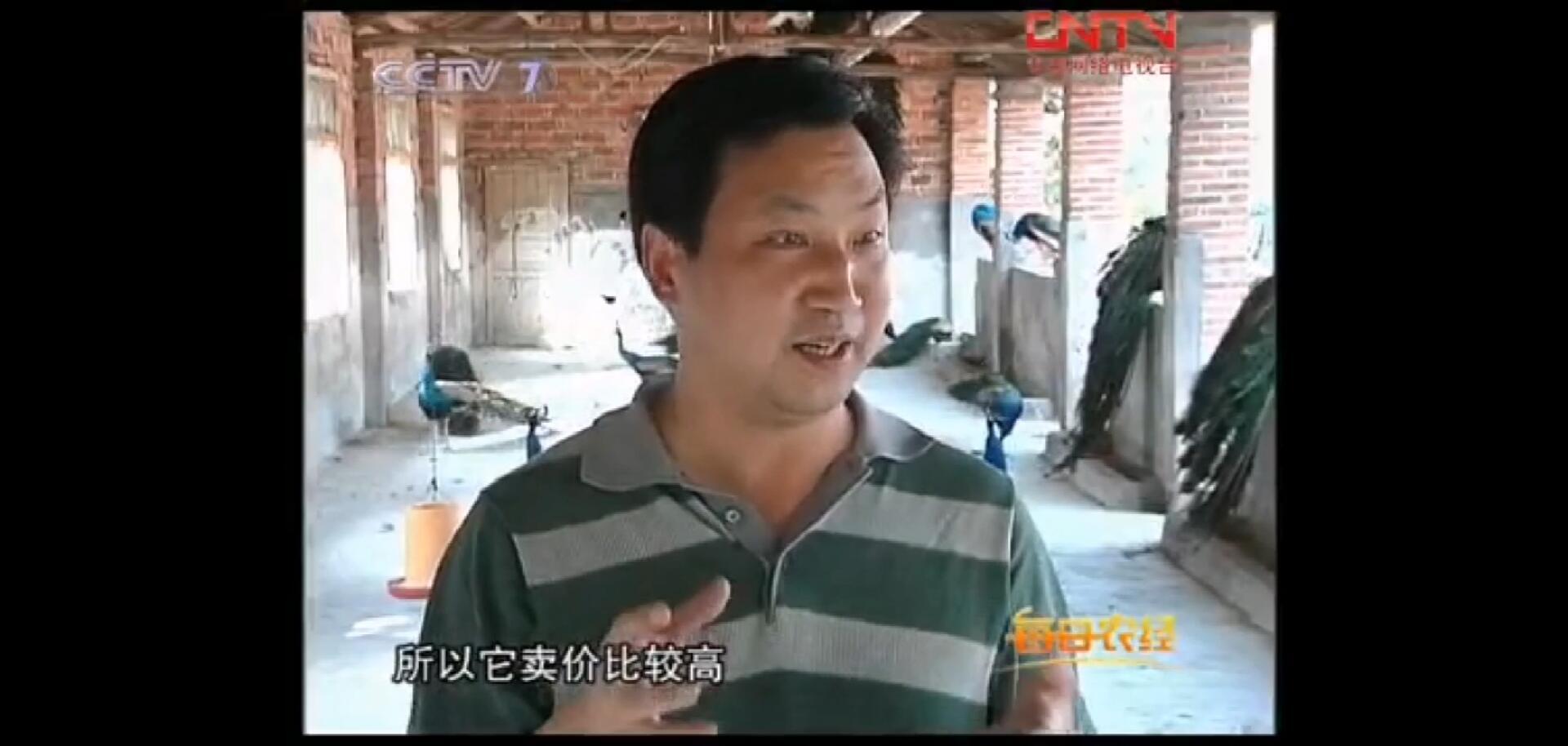 CCTV-7每日农经中华彩票网是不是真的蛋也赚钱