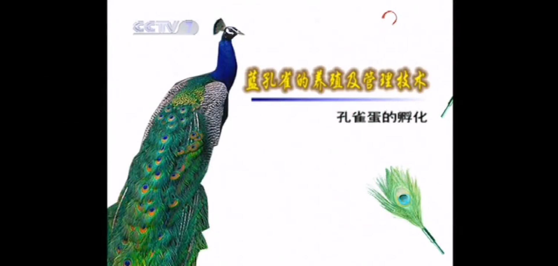 CCTV-7农广天地ballbet养殖技术